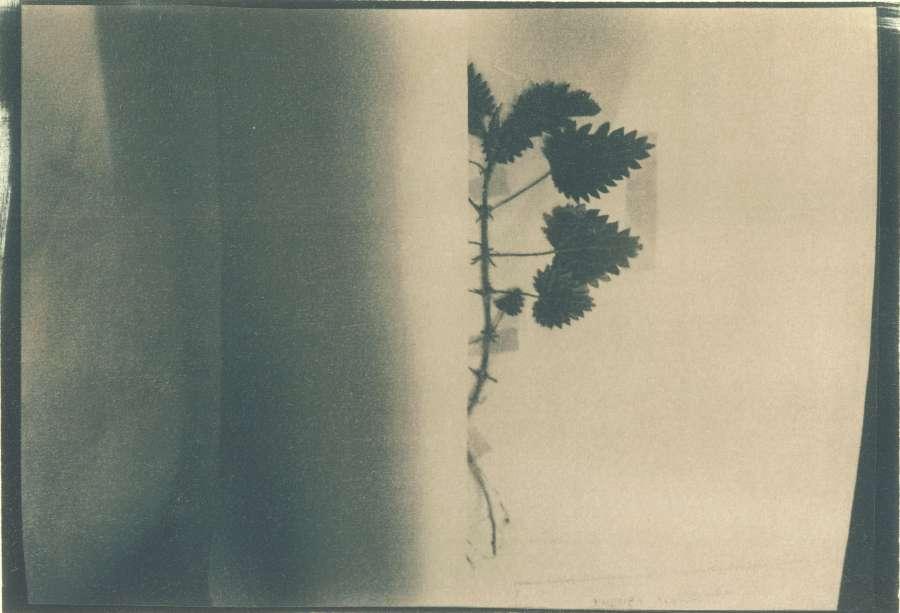 herbarium_3