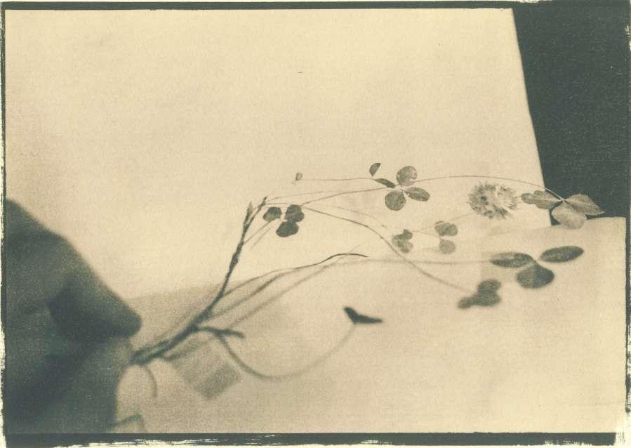 herbarium_4