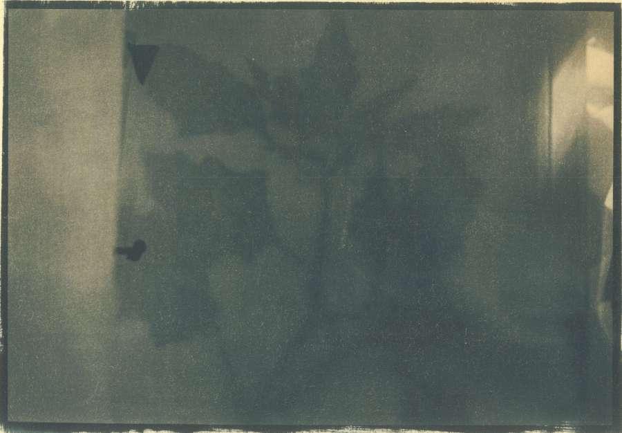 herbarium_5